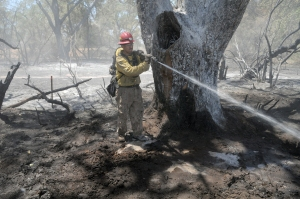 Bosque fire fighter