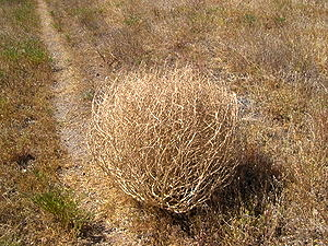 tumbleweed path