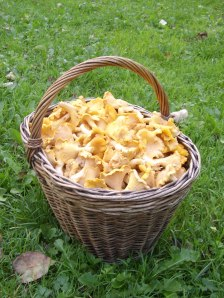 chanterellus basket