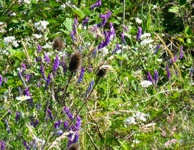Mixed flora