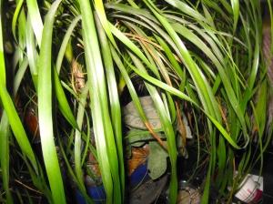 Molson under plant