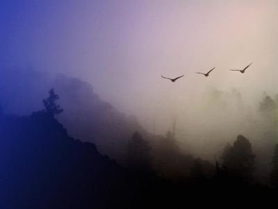 wild geese by MO
