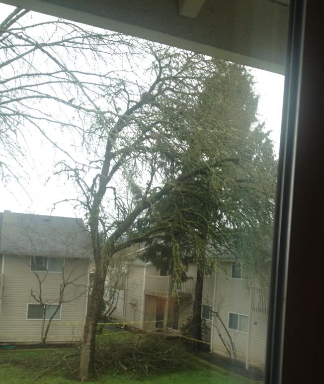 tree trim 4