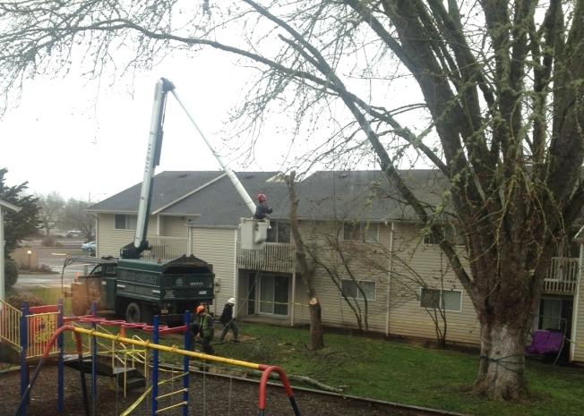 tree trim2